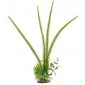 Текстильные растения